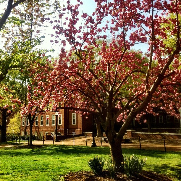 The best view coming out of lab @johnshopkins #spring