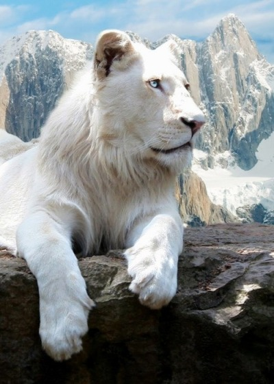 funnywildlife:  The White King II