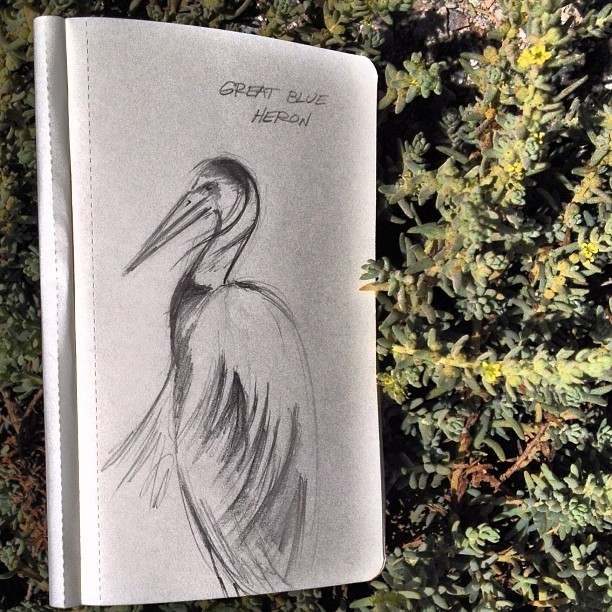 Birding Without Gear Rule: Heron chillin' like a villain means doodle opportunity. Keep paper and pencil handy!