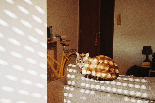 photogenicfelines:  (mariarapaz)