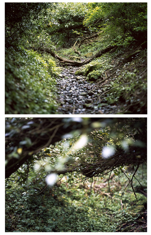 Film Photography Submission By: dougmitchell  Tolkien Trail by photography Doug Mitchell Shot with  Pentax 67 // Fujifilm Superia 100 http://dougmitchell.tumblr.com www.dougmitchell.co.uk
