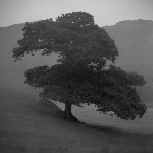 voigtf64:  tree Langdale sq
