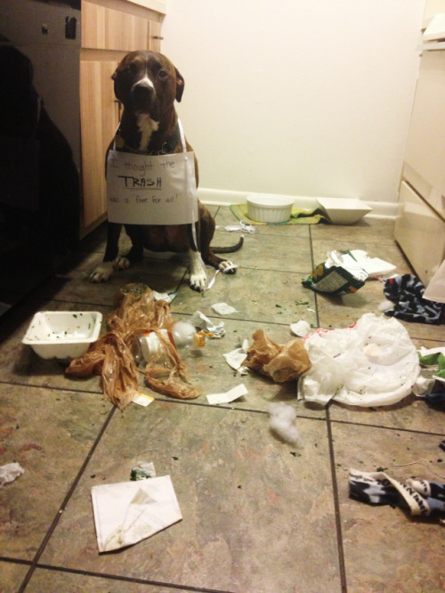 dogshaming:  Trash Eater  I thought the trash was a Free For All  View Post