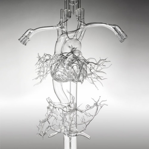 mabelmoments:  A detailed glass anatomical model could be the perfect gift for the science nerd on your list, if you can stomach the $25,000 price tag. Photo by Garry McLeod via Wired Quirky Holiday Gift Ideas for Science Nerds
