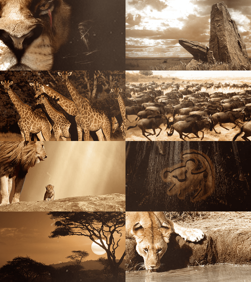 Fairy Tale(ish) Picspam → The Lion King