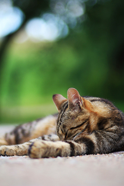 89cats:  just let me have some nap.. by MigleS. on Flickr.  This.