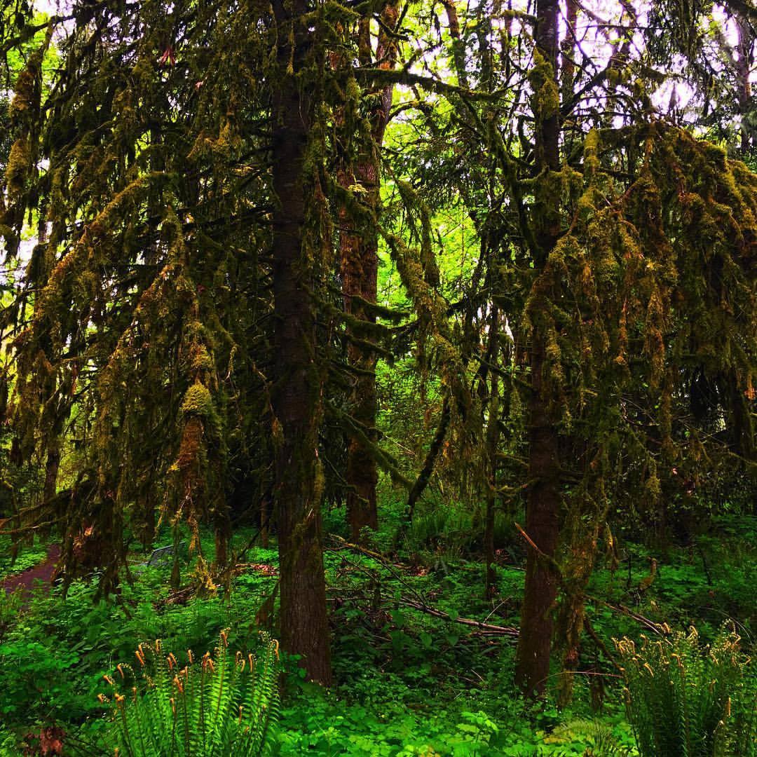 The woods of Oregon. (at Tualatin River National Wildlife Refuge)