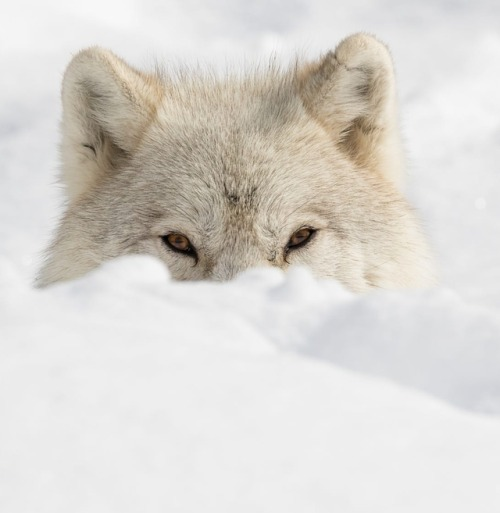 Sneaky look by © Dominic Marcoux