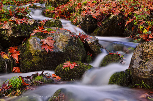 Autumn moments - Explore by george papapostolou on Flickr.