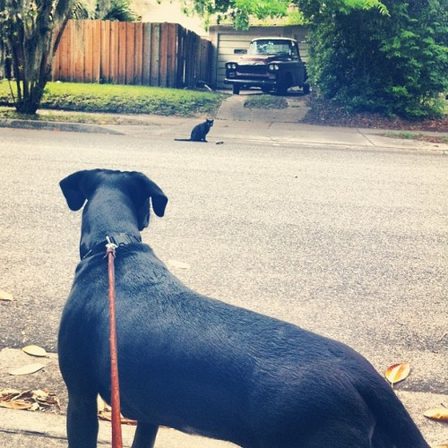 #dog #cat #beautiful #vintage #truck #savannah we both spotted something we like