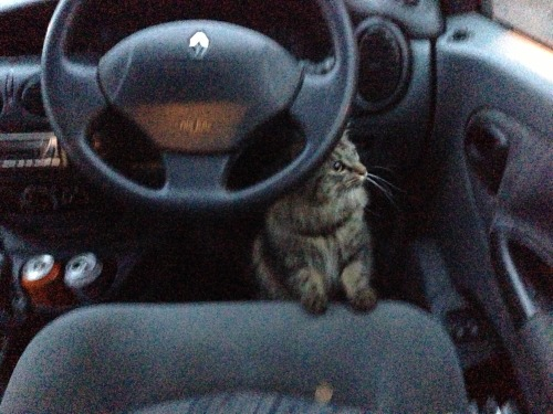 get out of there cat. you can't drive. you don't have a license.