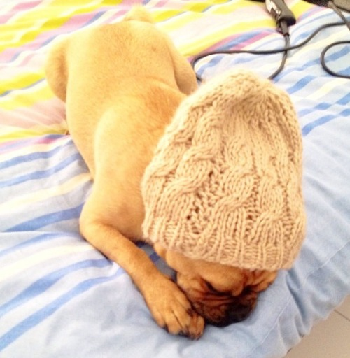 ionlywishtobefree:  Pug ready for the cold weather ahead.