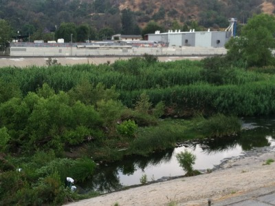 Just arrived on the #LA River, La Gran Limpieza!! Hundreds Of volunteers are here to clean  The concrete channel