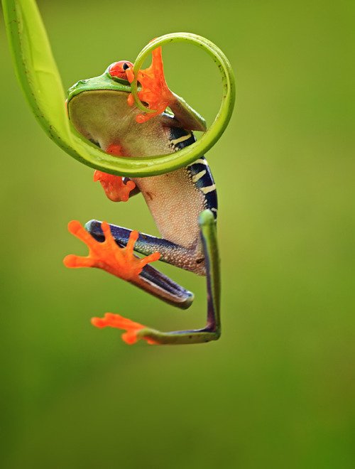 theanimalblog:  Climbing. Photo by Shikhei Goh