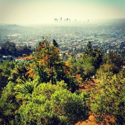 vatoben:  It's a beautiful morning in the city of angels.