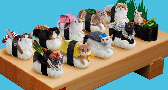 This is happening in Japan. Cat Sushi.