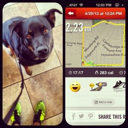 #Maxinemondays. #myneice #workout #running training #dogstagram #dog #rottweiler #labrador #nike #nikerunning #niketraining #teamnike #nikelasvegas #nikelv #flyknit #trainer #flyknittrainers #lasvegas #91degrees #funinthesun @oleggarcia @mlauguico