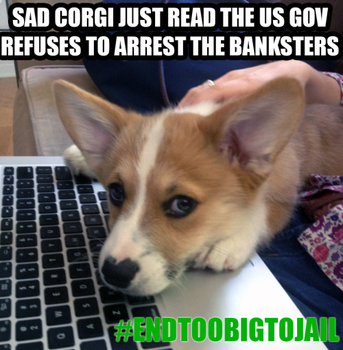 No corgi deserves to be sad, ARREST the people who crashed our economy! Watch as 100s of homeowners, many of whom had their homes stolen by the banks, march on Washington DC http://www.livestream.com/globalrevolution