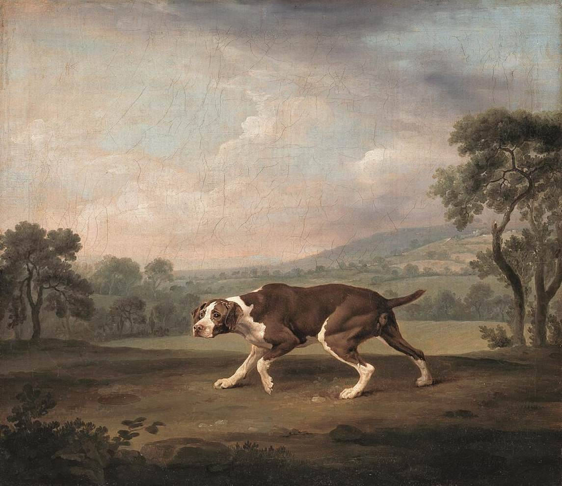 cavetocanvas:  George Stubbs, The Pointer, c. 1766