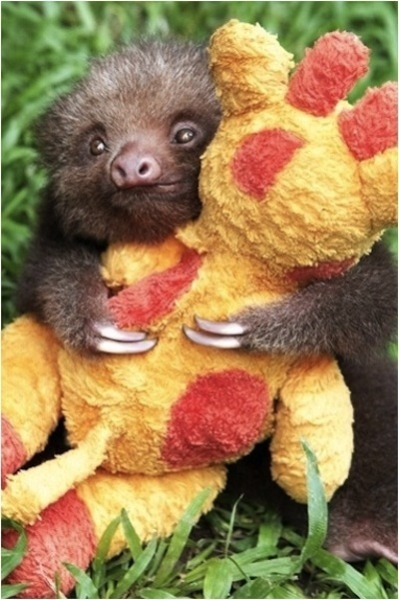 Have I informed you all for my uncontrollable love for sloths?