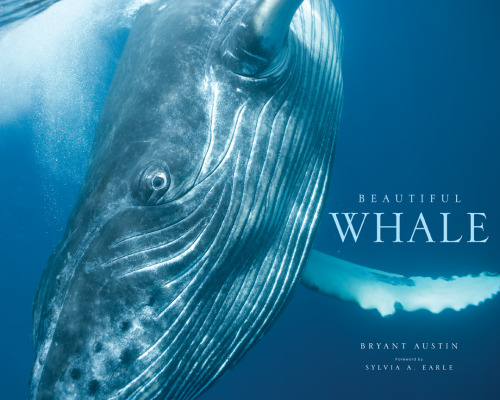 photography-beautiful-whale-by-bryant-austin