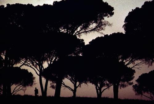 Lone figure at sunset with roman pines, Italy, 1975. by Burt Glinn