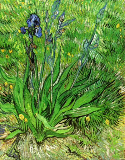 lonequixote:  The Iris, 1889 ~ Vincent van Gogh