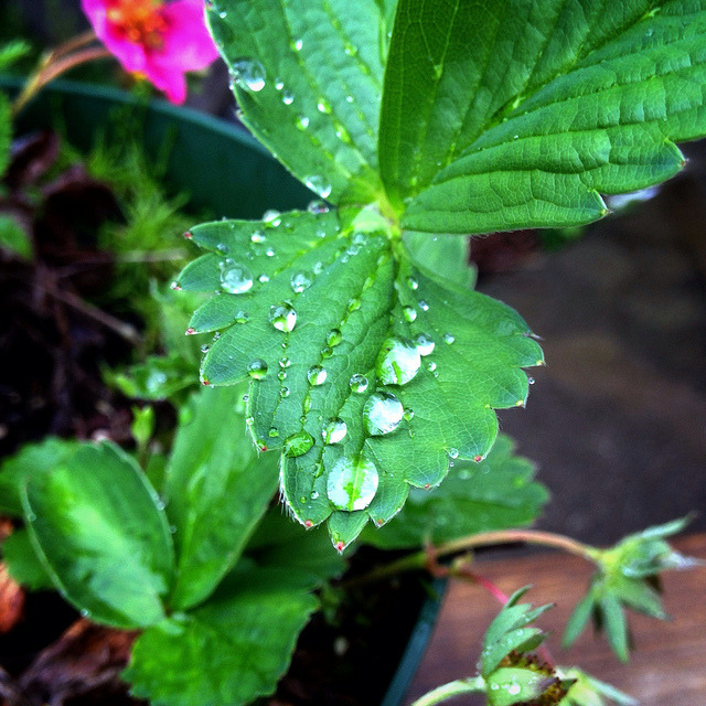 P365x52-137: Droplets on Flickr.
