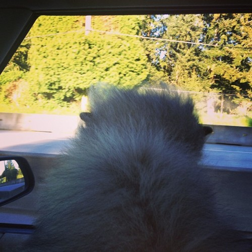 The wind in my fur…