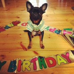 austengriffon:  Today is Austen's 2nd birthday! He's all dressed up and we're off to the dog park for lots of fun playing! He might get some extra treats and presents today too 😉 Can't believe he's 2 already our baby boy! Happy birthday Austen Bean Griffon we love and adore you! 💘🎉🎁  Happy Birthday, Austen!!! We love you.