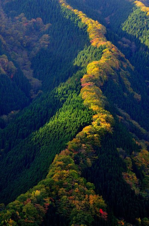 ovadiaandsons:  Valley in Japan
