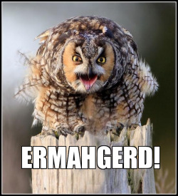 rage-comics-base:  20 Hilariously Adorable Owl Memeshttp://rage-comics-base.tumblr.com
