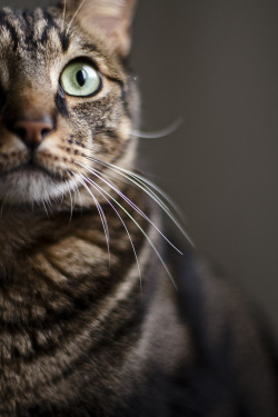 all-things-bright-and-beyootiful:  Cat ~ by Juan Luis Morilla  This could be my Callie :)