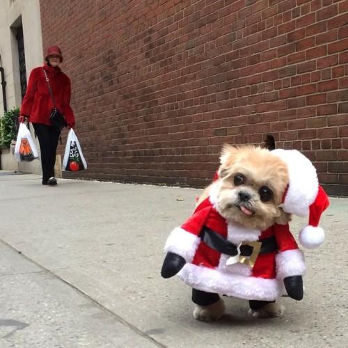 Tastefully Offensive on Tumblr, marniethedog: Holly golly haha