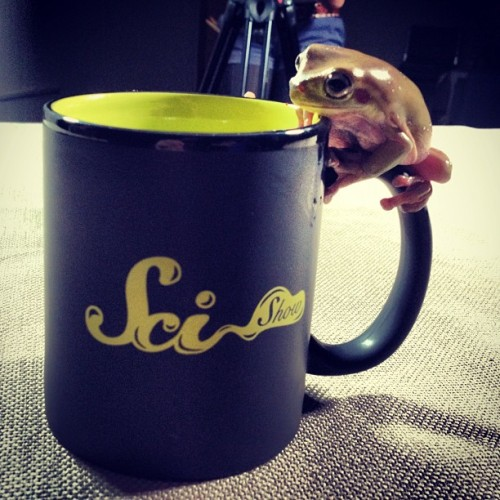 edwardspoonhands:  SciShow talk show mugs available at DFTBA.com. Tree frogs not included.  Thank goodness! I would die if I got a frog in the mail. I have an irrational fear of frogs.