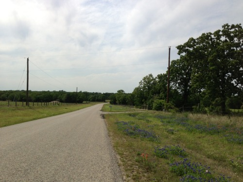 "Saturday Cycling  -Route: Horse farm loop -Location: south College Station -Distance: 14.5 miles -Average speed: 16.0 mph -Average heart rate: 169 bpm -Weather: 77 sunny, SE wind -Number of other cyclists: 1 -Number of horses at the horse farm: 41 -Number of cows at the horse farm: 1 -On my iPod: Gulp by Mary Roach  It's a beautiful day to ride. It's also Parents' Weekend so I made sure to steer clear of campus and the main roads. Parents' Weekend is a townie's least favorite of the year. (Don't even think about going out to eat.)   I tried out a new strategy for refueling on the ride: homemade energy ""gel."" I typically have a gel every 30 minutes in warm weather (I have rapid blood sugar crashes if I don't). But we are out of Gu and rather than ordering more, I thought I'd give creating something homemade a go. I like Gu a lot (vanilla bean is my favorite), but there is little by way of electrolytes for my needs. With cystic fibrosis, I sweat an insane amount and lose a lot of salt, which results in muscle cramps and dehydration pretty rapidly (within an hour with no salt supplementation). I got my first reminder of that on a ride Matt and I did last week after work on a warm day. So today I experimented with a homemade gel of applesauce (simple sugars), molasses (magnesium, calcium, & potassium), agave nectar (complex sugars), some salt, and a little vanilla for taste. It didn't look very appealing and the taste was on the salty side, but it worked very well. I'm looking forward to trying it out on a hotter day and a longer ride."