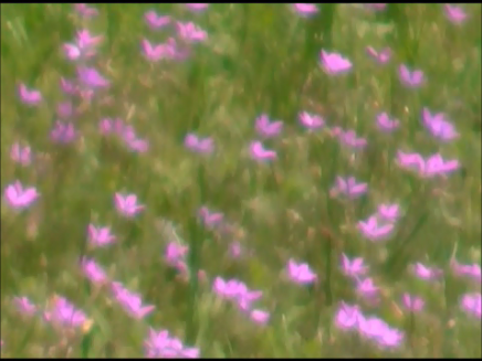 video frame from home movies/notes.     —- purple flowers —-