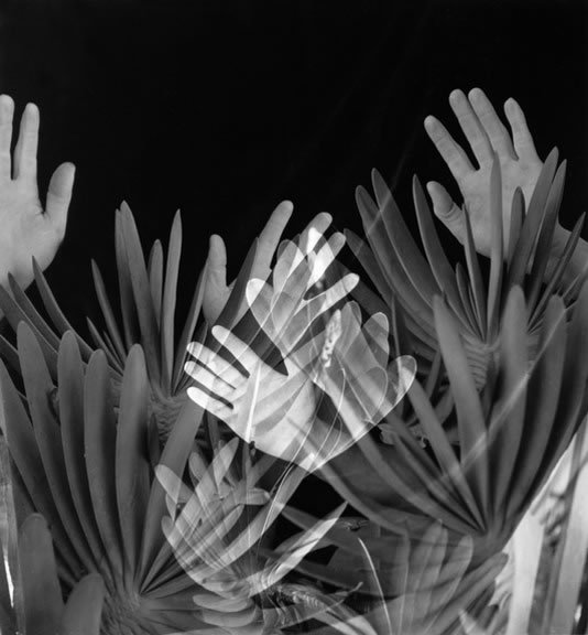 Hands and Aloe Plicatilis, 1960Imogen Cunningham