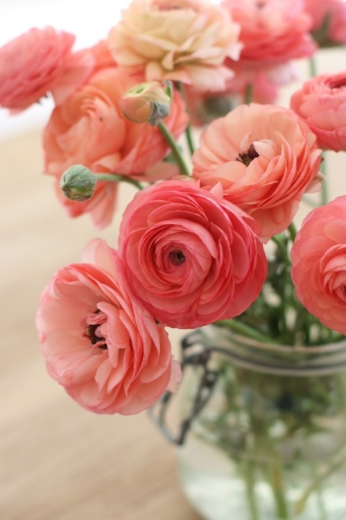 Ranunculus. PEACH Ranunculus…i wanted these and peach dahlias so badly for my wedding flowers but alas, they were out of season.