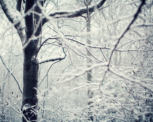 The Story of Snow by IrenaS on Flickr.