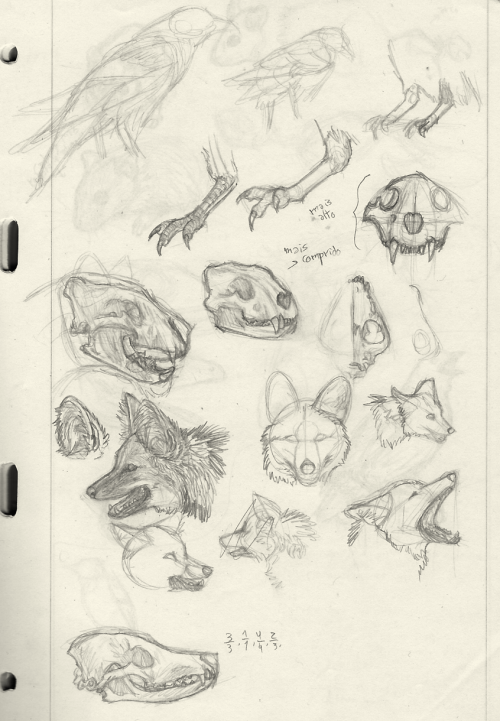 I have a pad full of studies like these. This is what precedes an illustration, be it scientific or just for fun.