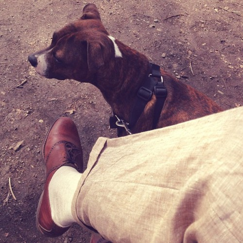 #SaddleShoes #linen & #StaffordshireBullTerrier