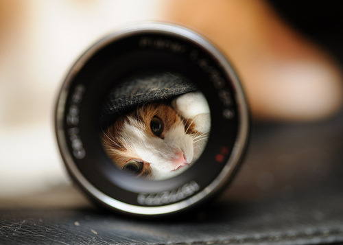 flickr 272E Carl Zeiss Planar Planar T* 50mm F1.4 ZF.2 TAMRON cat daifuku lens refraction ねこ 猫 eye eyes explored