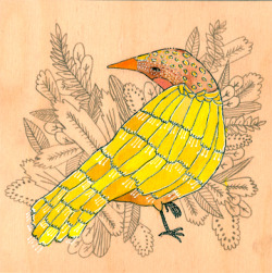 Illustration art pencil nature bird ink gouache artist on tumblr vancouver Put a Bird On It wood panel Vancouver artist