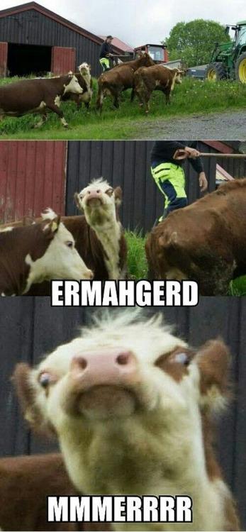 Funny Meme Tumblr : Funny farming memes tumblr