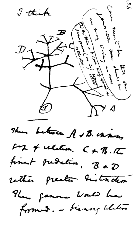 "The Tree of Life Evolves In honor of Darwin Day (Charles would have been 204 years old on Feb 12, if he were immortal or something), here's a few of my favorite trees of life from through the ages. Some were designed as scientific references, and some as purely creative tributes, but all are works of art. From Top: Darwin's original sketch from On the Origin of Species (1859) Ernst Haeckel's Generelle Morphologie der Organismen (1866) The famous Hillis Plot drawn on a felled tree  An imaginative take on the tree of life by Rosalyn Schanzer Richard Amm's tribute to the ""grandeur in this view of life"", with biology's increasing complexity growing from the center of a shell As Darwin was inspired by the beauty of nature's forms to discover how all of Earth's species are connected, may we be inspired to discover the beauty in science for ourselves.  Happy Darwin Day on Tuesday!"
