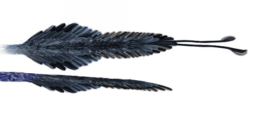 Raptor tail feathers