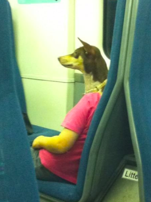A few days ago I was sitting in the train and saw this. Animals don't sit still for long so this was a nice opportunity to test my CameraLens!