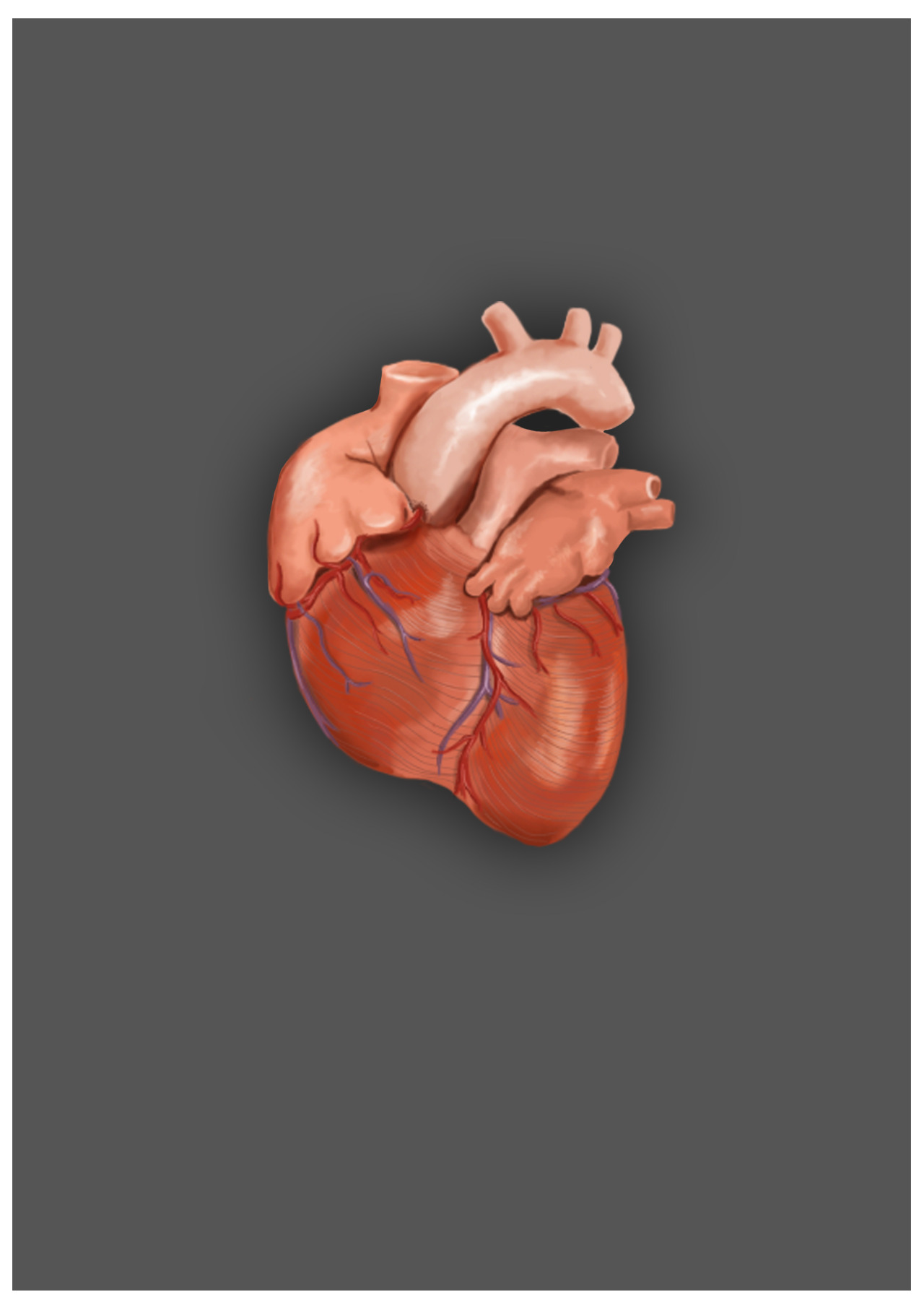 Another painting for my anatomy app :)