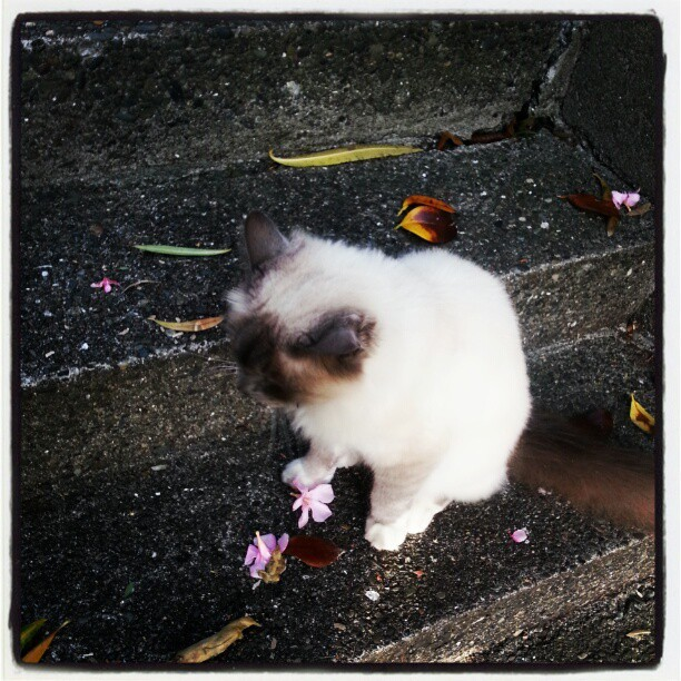 #Bill the neighbourhood #cat